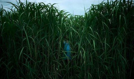 in the tall grass horror film cover
